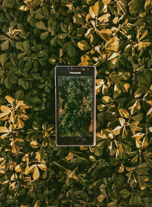 vsco, yeşil Yaprak içeren Ücretsiz stok fotoğraf