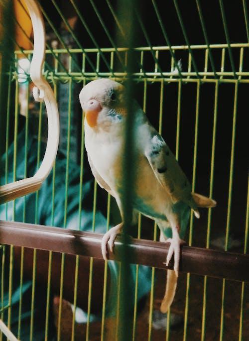 beyaz kuş, bulanıklık, papağan içeren Ücretsiz stok fotoğraf