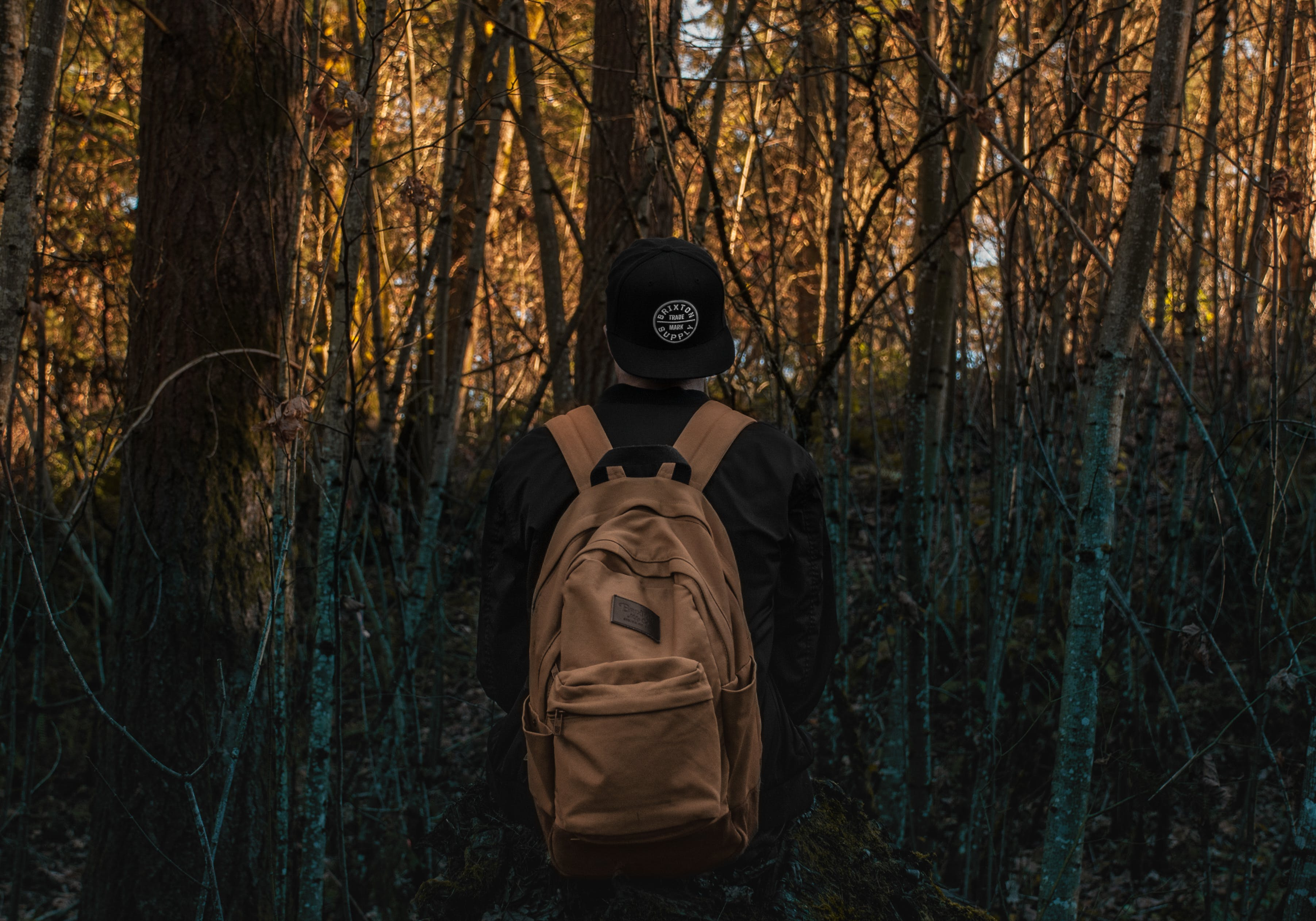 Photo of a Person at the Forest
