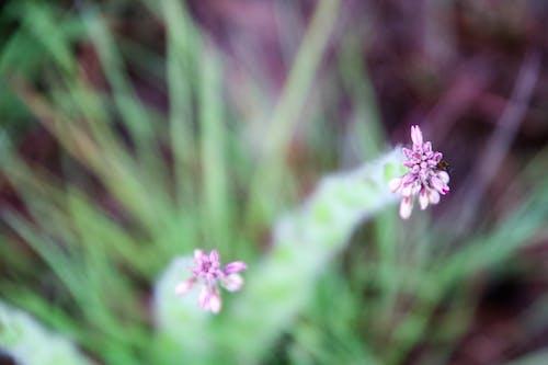 Kostnadsfri bild av blomknoppar, blomma, blommor