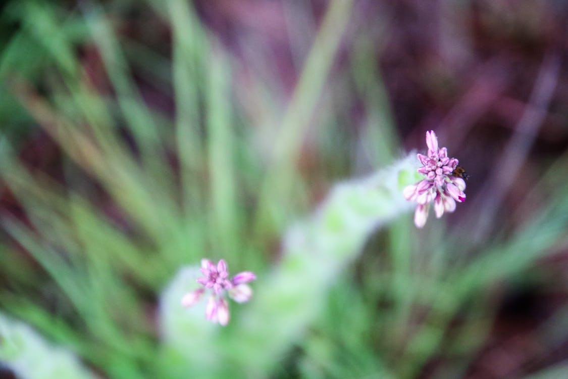 Selective Focus Photography of Flower Buds