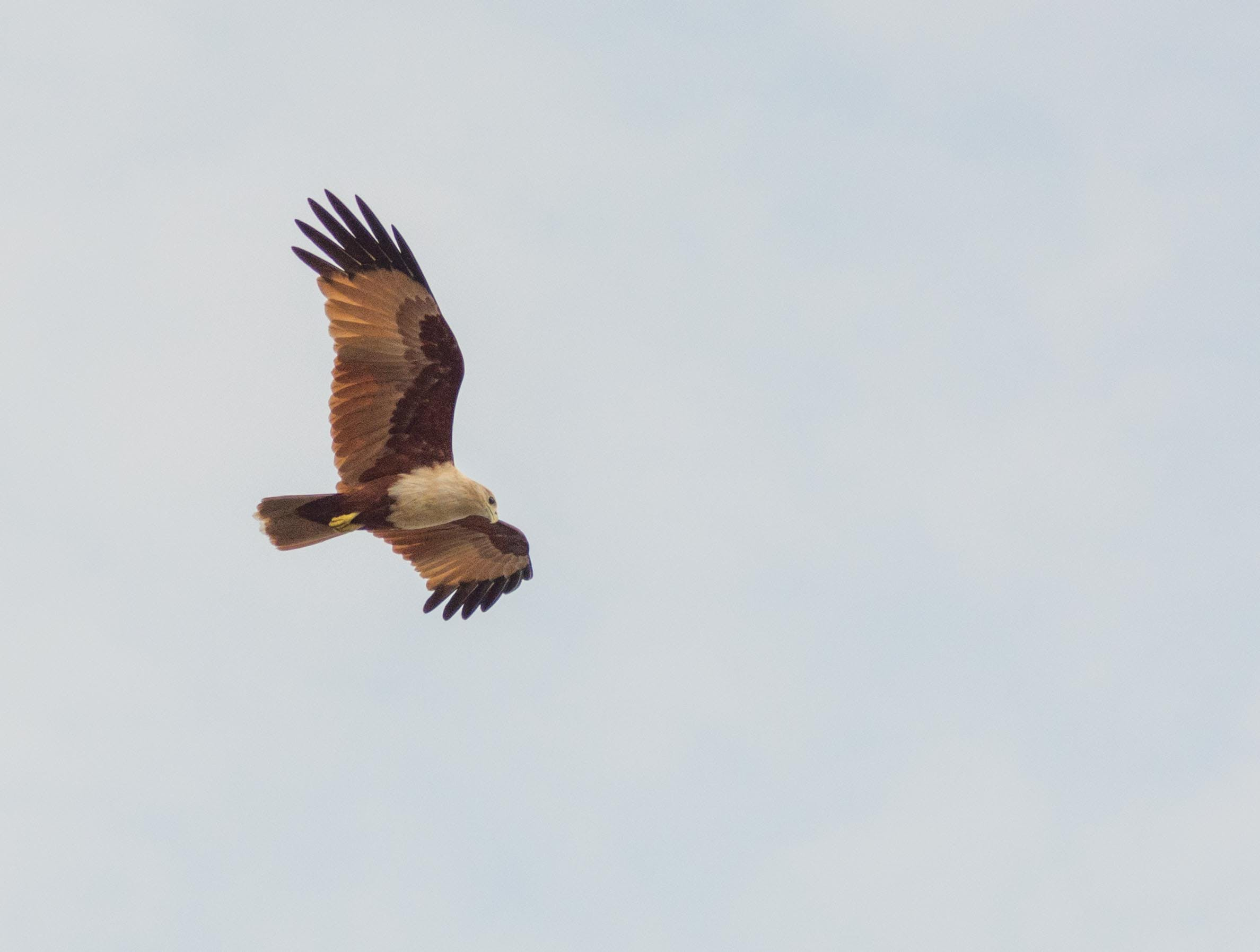 Photography of White and Brown Bird Flying