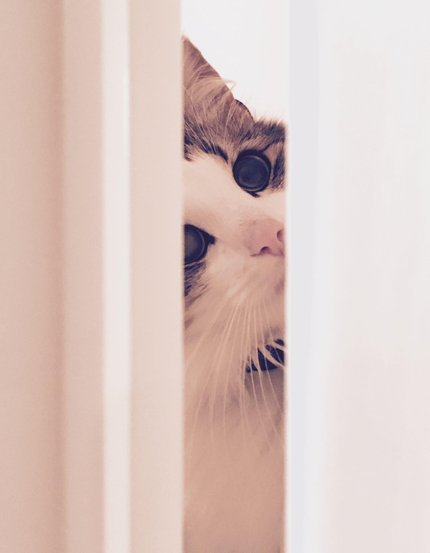 Free stock photo of white, door, cat, hiding