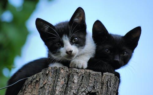 Darmowe zdjęcie z galerii z kocięta, niebo, pień, uroczy