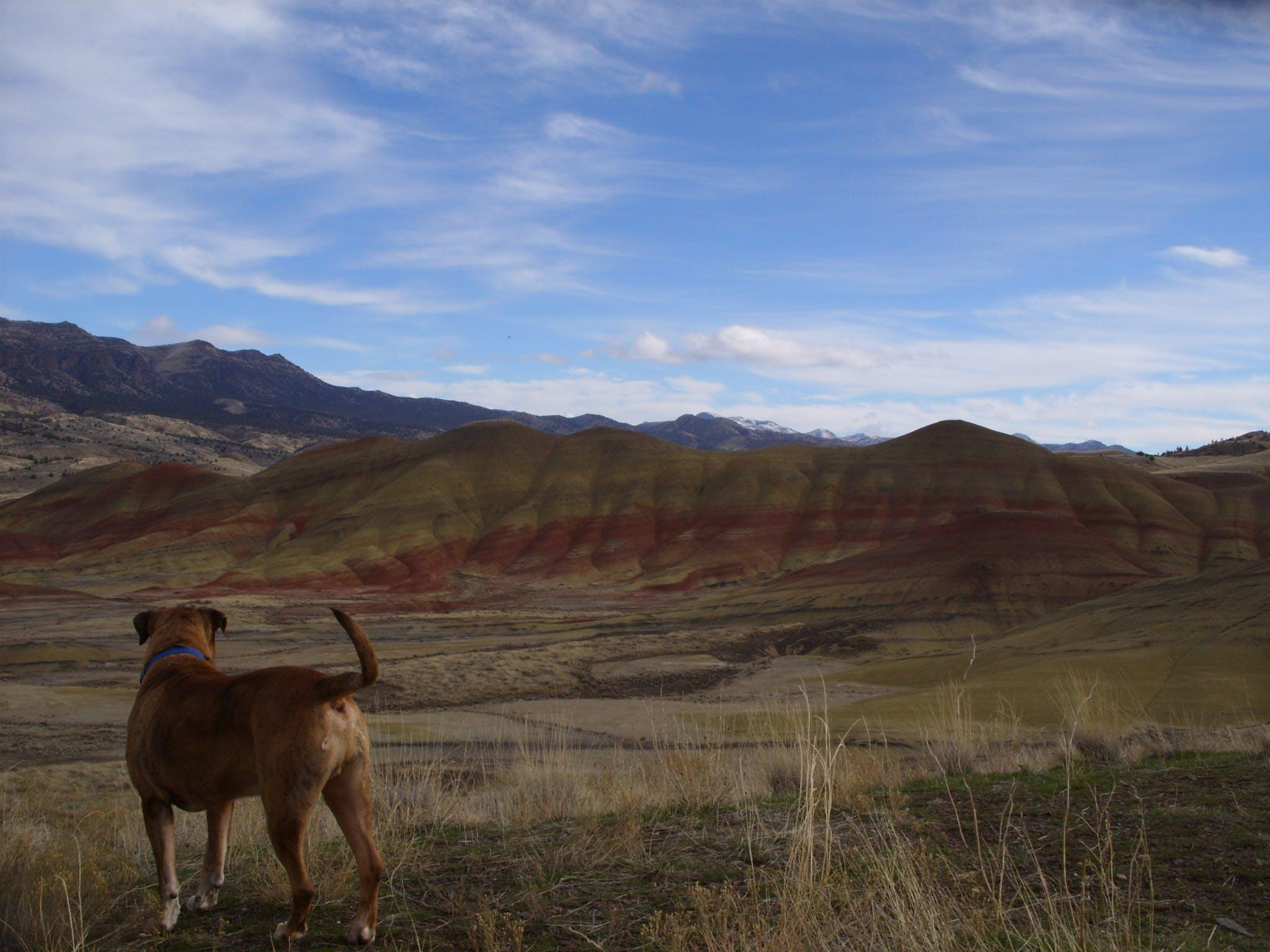 Free stock photo of Painted Hills, Joe Leineweber