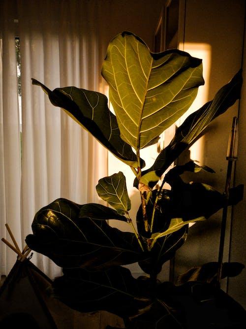 Free stock photo of dark green plants