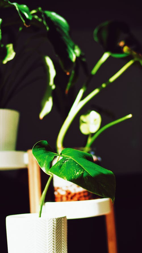 Free stock photo of dark green plants, decorative plants