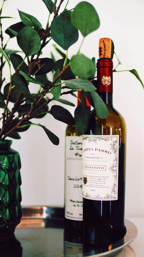 Free stock photo of vine