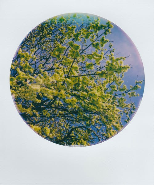 Green and Brown Tree Painting
