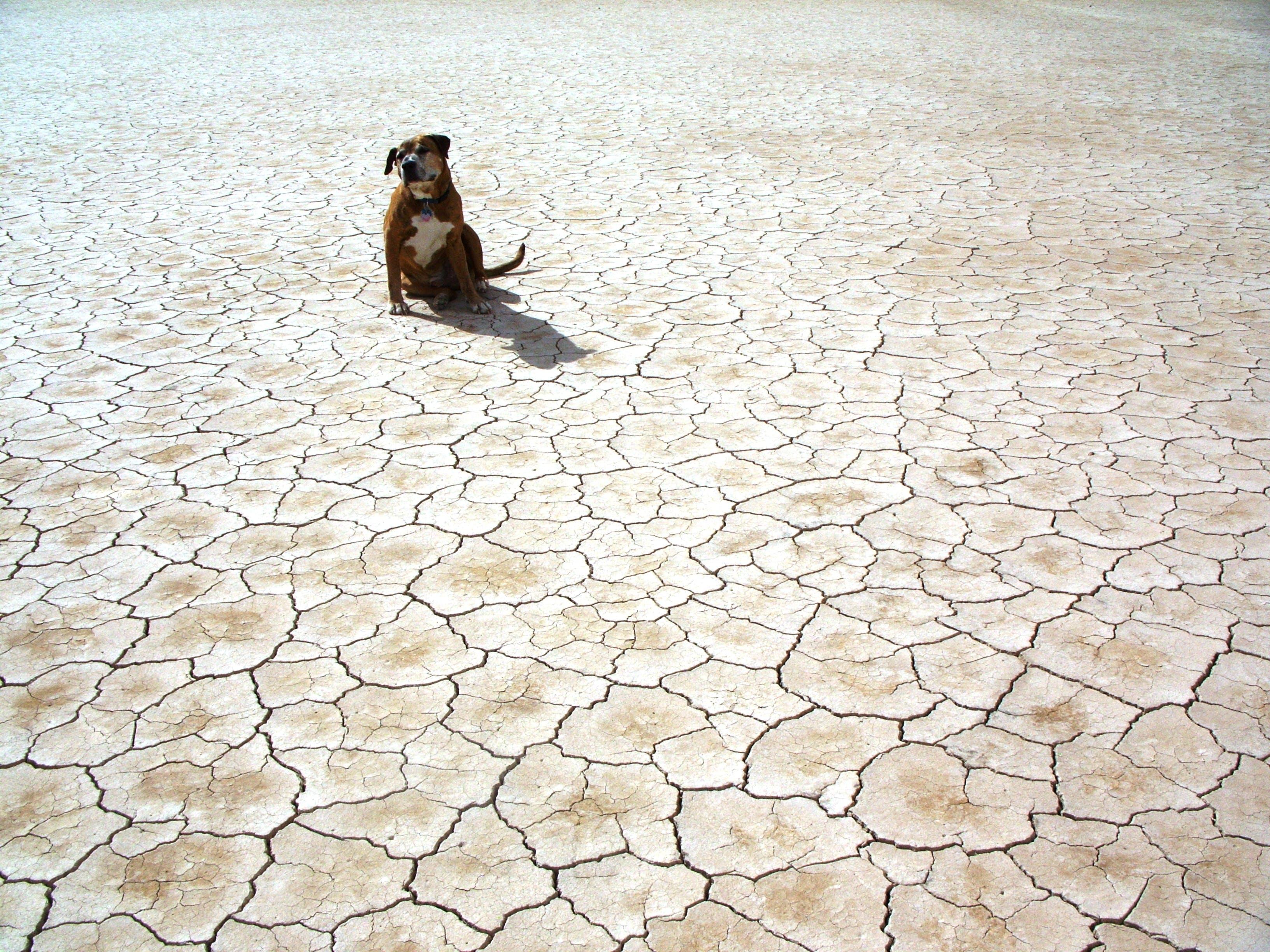 Photography of Dog Sitting on Ground