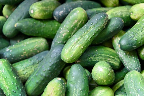 Free stock photo of agriculture, cucumber, cucumbers