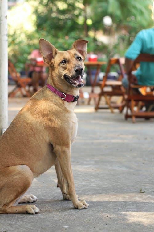 Brown Short Coated Medium Sized Dog Sitting on Gray Concrete Floor