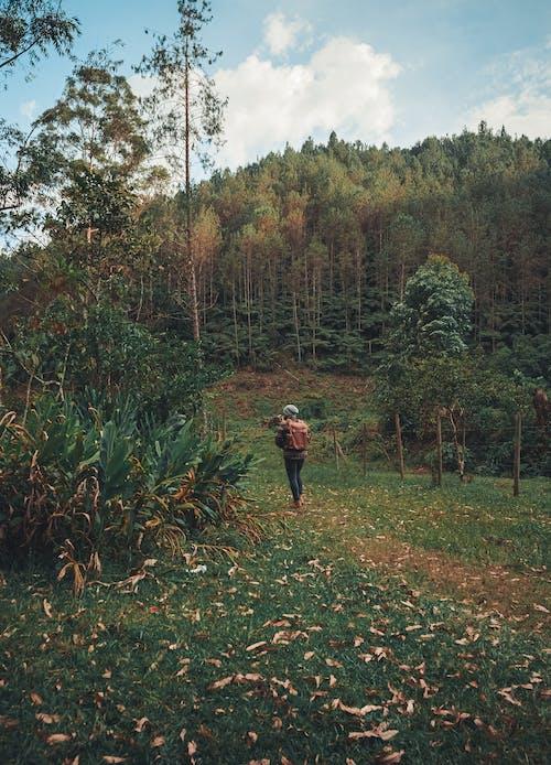 Ingyenes stockfotó aratás, emberek, fa témában
