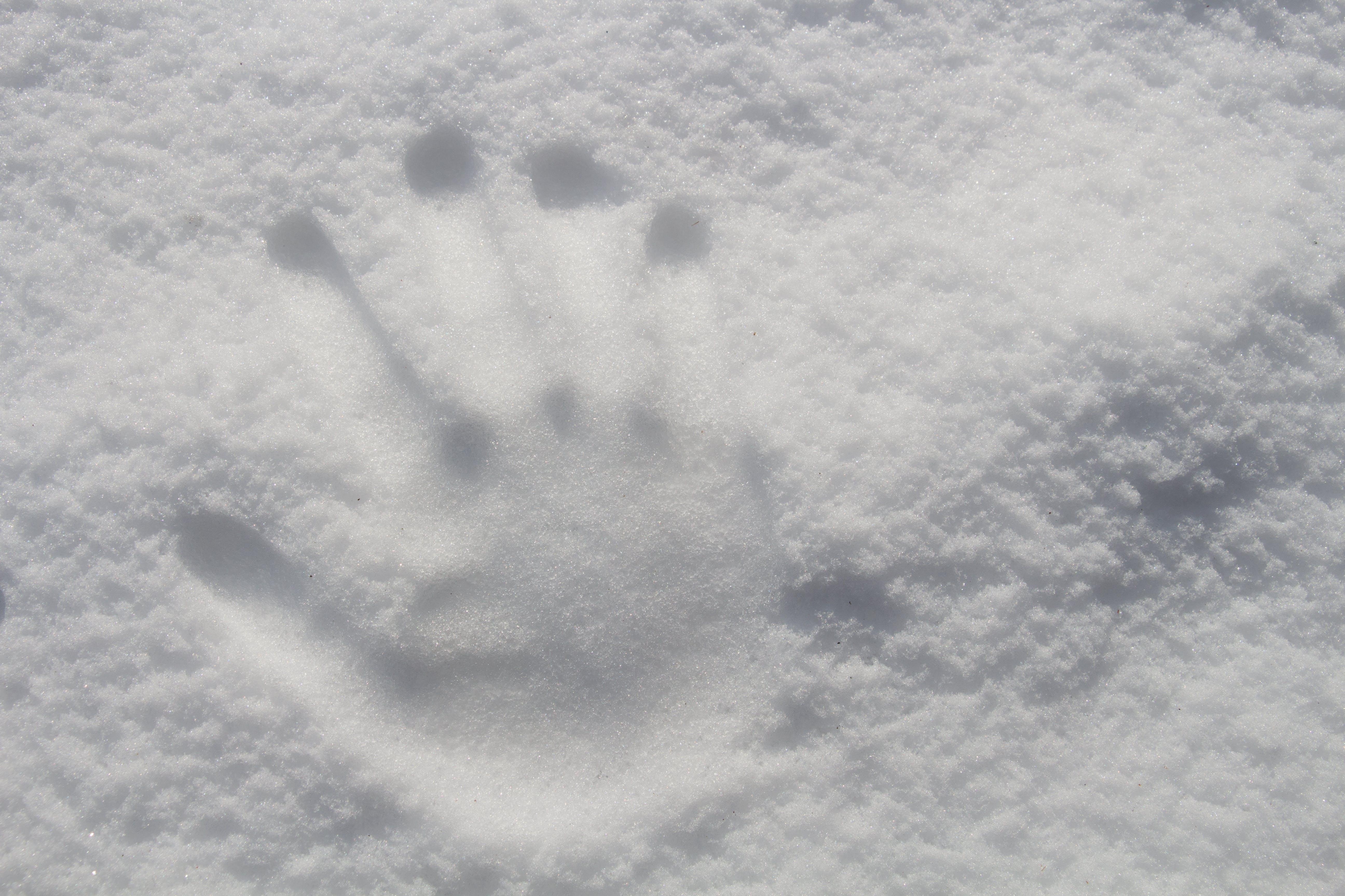 Kostenloses Stock Foto zu kalt, schnee, hand, wetter