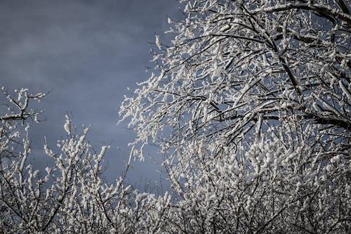 açık hava, ağaçlar, buz tutmuş, dallar içeren Ücretsiz stok fotoğraf