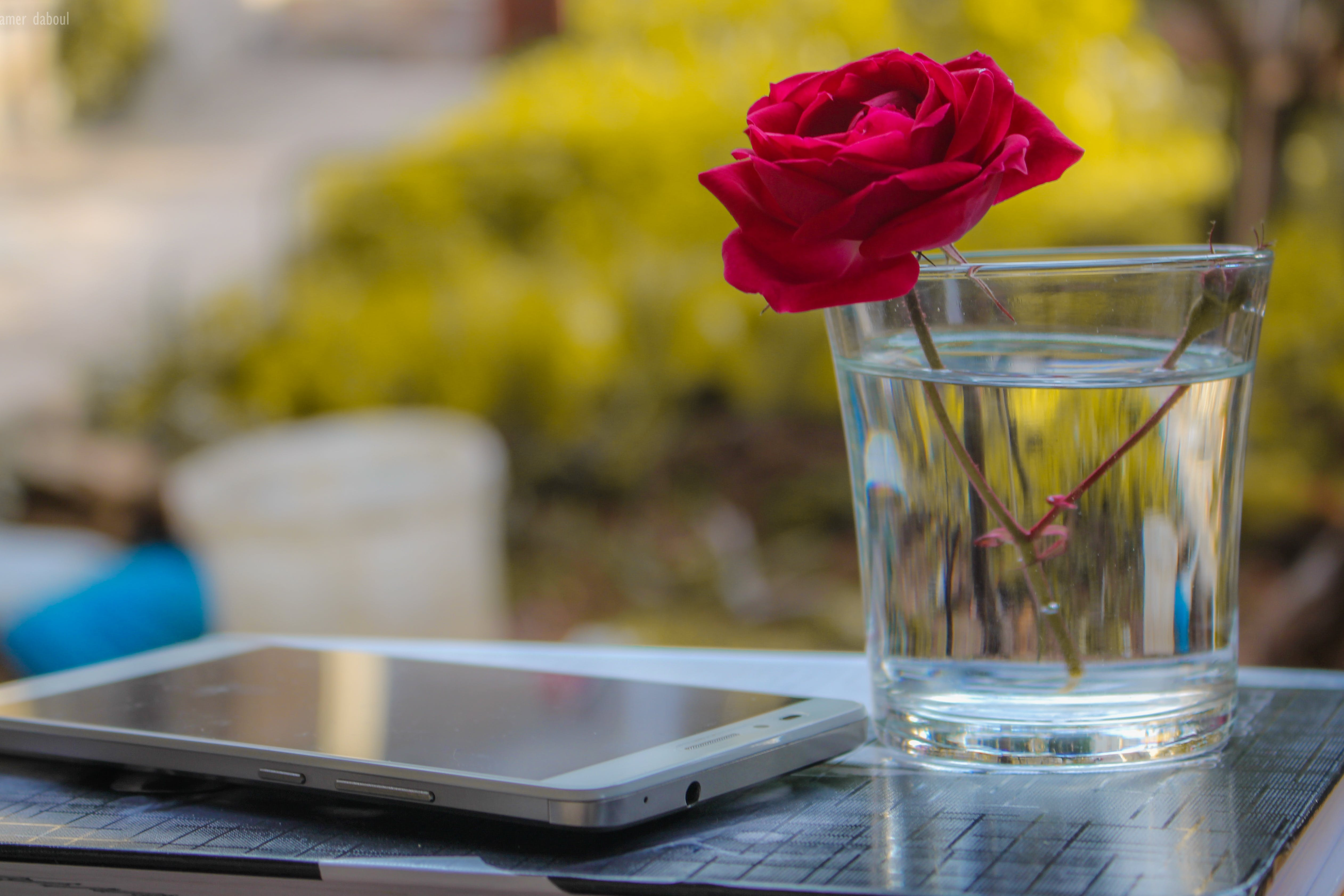 White Android Smartphone Near Clear Glass Vase With Red Rose
