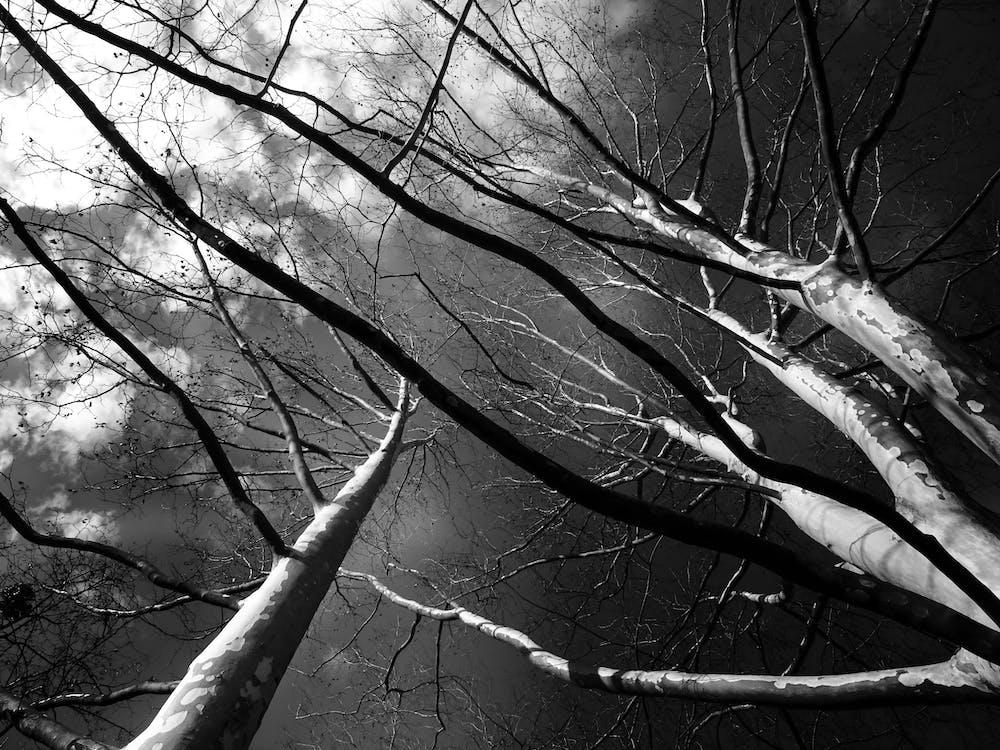 ágak, alacsony szögű fényképezés, ég