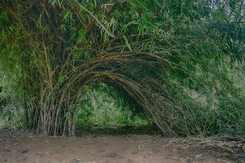 Immagine gratuita di ambiente, campo, crescita, erba