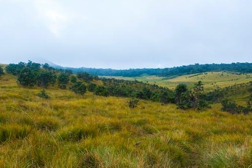 Foto d'estoc gratuïta de arbres, camp, cel, colors