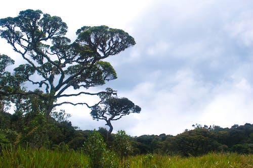 ağaçlar, alan, bulutlar, büyüme içeren Ücretsiz stok fotoğraf