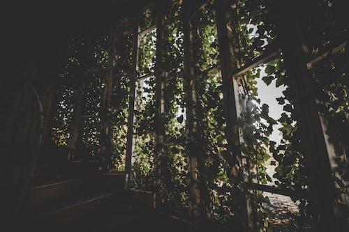 Kostnadsfri bild av anläggning, dagsljus, grön, landskap