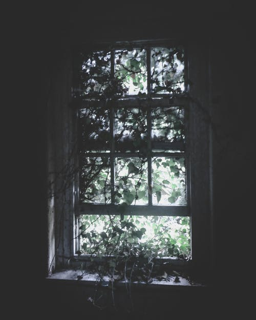 Wooden Window Pane With Vines