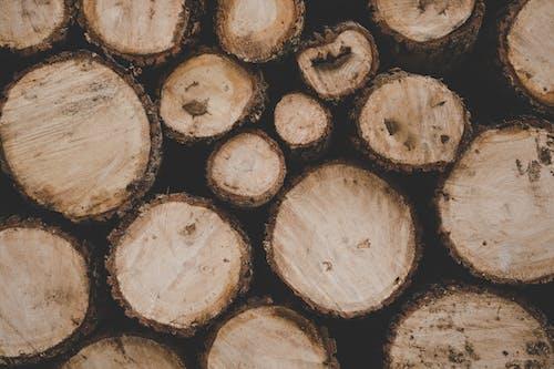 ağaç kütüğü, ahşap, istif, kesmek içeren Ücretsiz stok fotoğraf