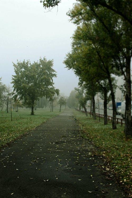 Free stock photo of fog, green, trees