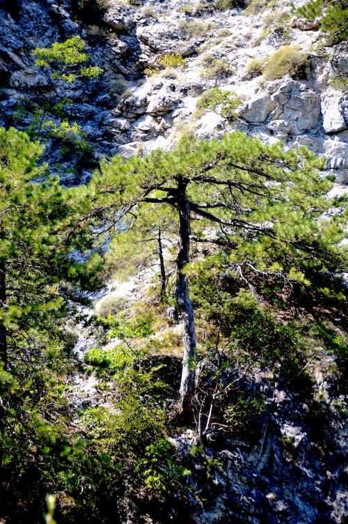 그리스, 녹색, 산, 소나무의 무료 스톡 사진