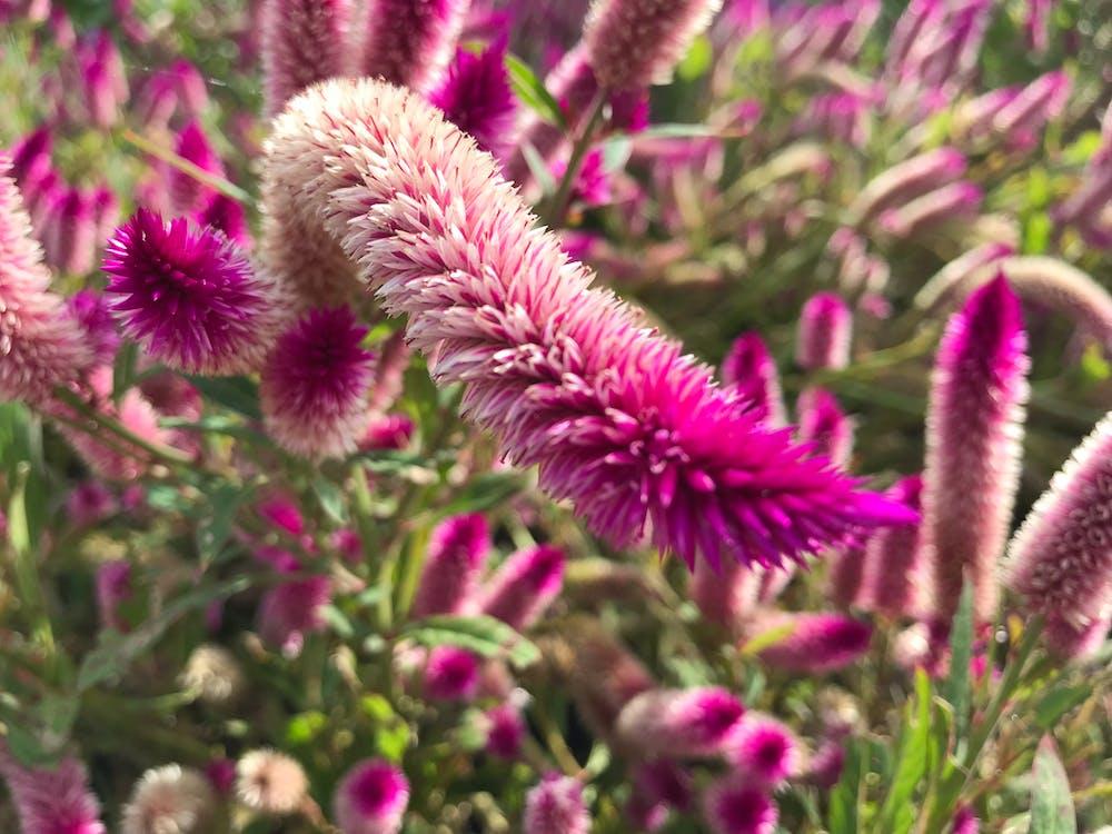 Free stock photo of alien, beautiful flowers, flowers
