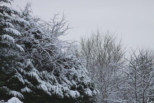 Ảnh lưu trữ miễn phí về bầu trời trắng, cây, glasello, mùa đông