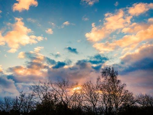 Ảnh lưu trữ miễn phí về bầu trời buổi tối, cây, giờ vàng, Hoàng hôn