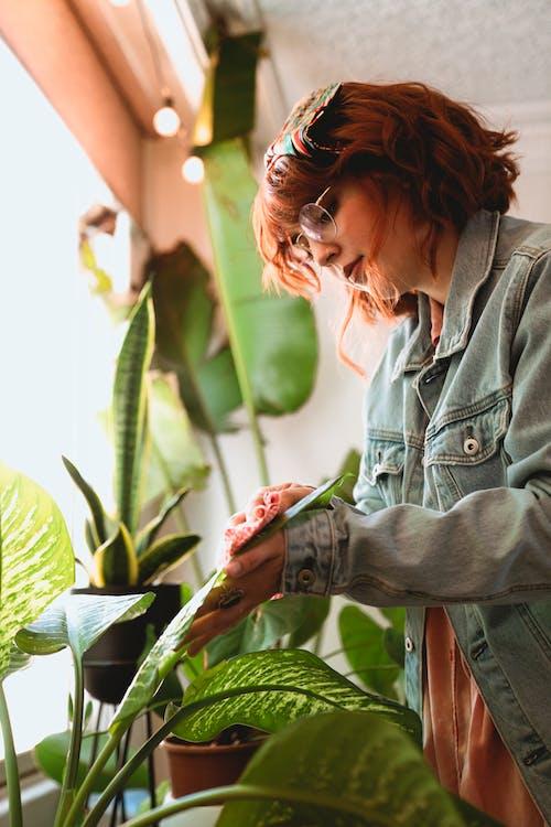 Immagine gratuita di a casa, amante delle piante, capelli rossi