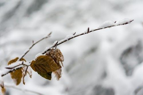 Základová fotografie zdarma na téma detailní pohled, makro, rýma, sníh