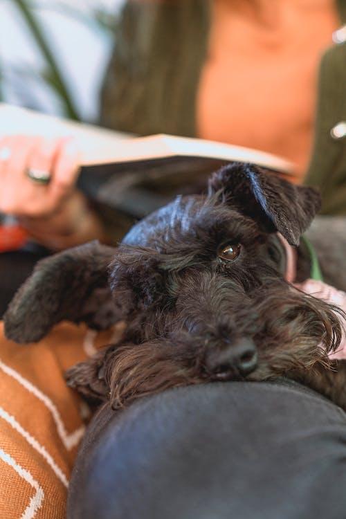 Black Short Coated Small Dog