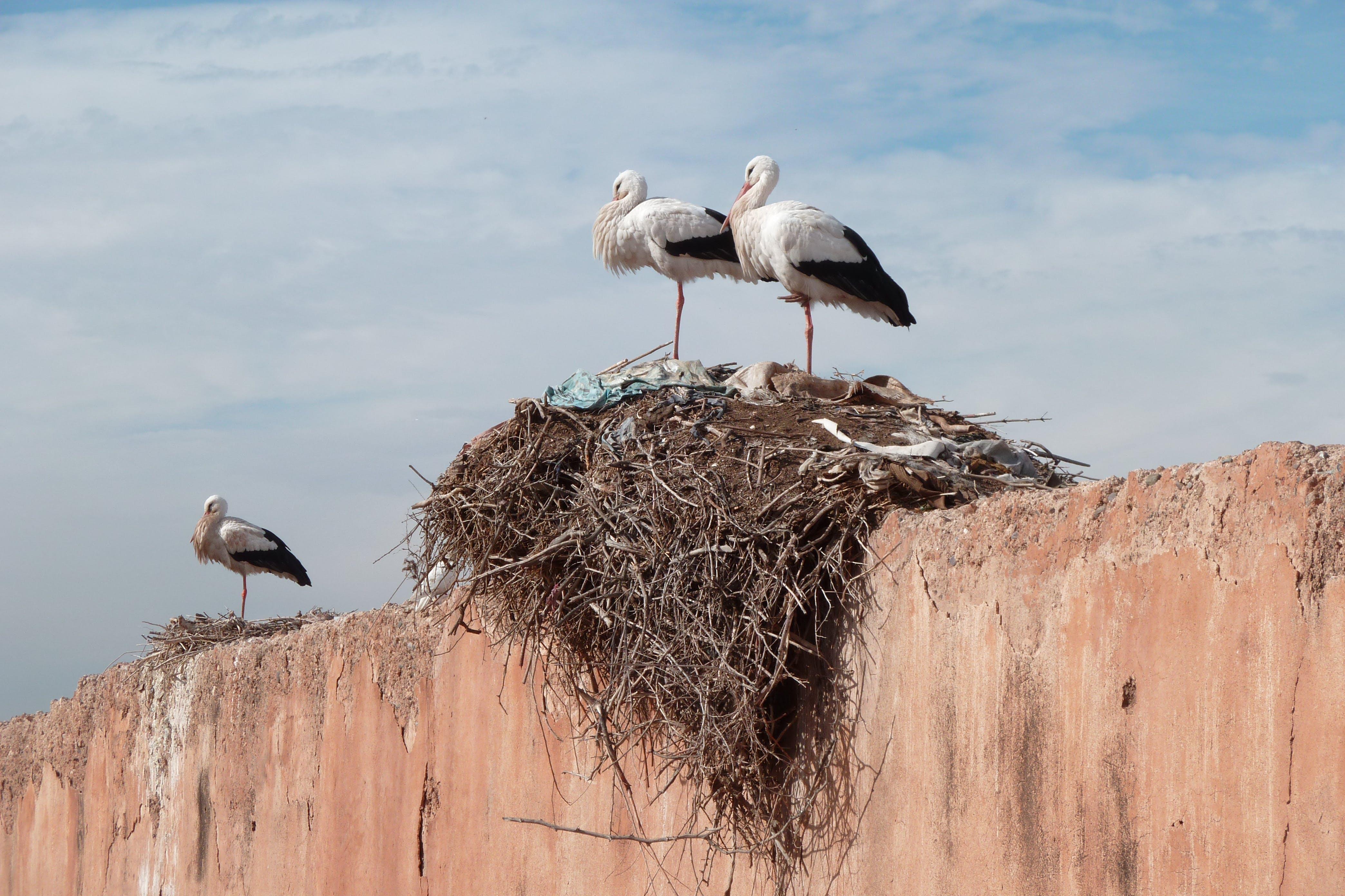 Two Birds on the Bird's Nest Under White Clouds