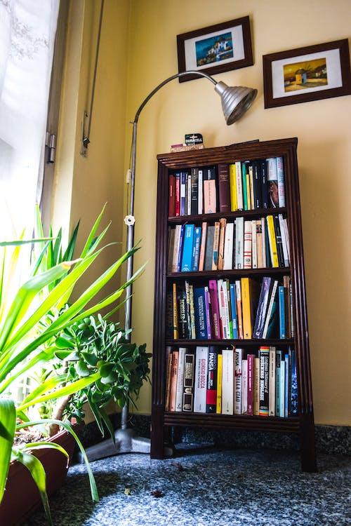Imagine de stoc gratuită din bibliotecă, biblioteci, cameră
