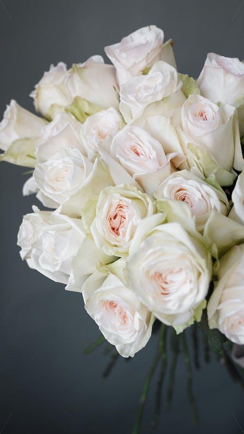 Bunch of elegant white roses against gray background