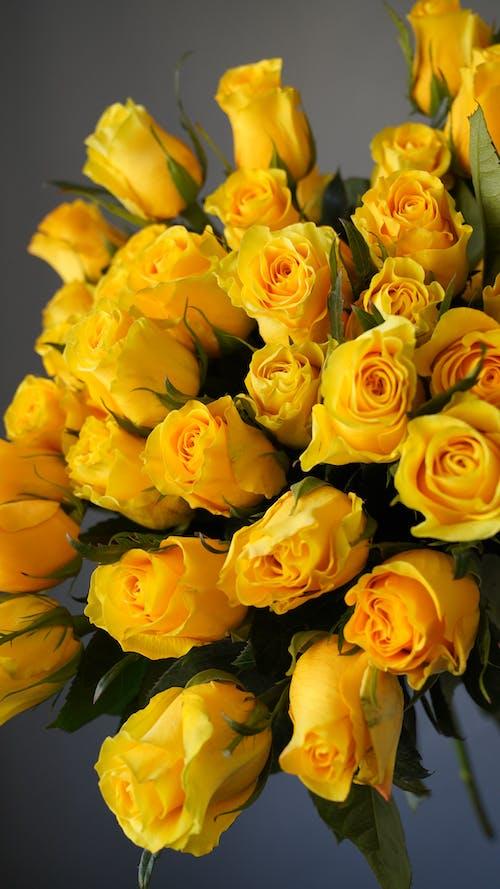 Bouquet of fresh yellow roses in gray studio