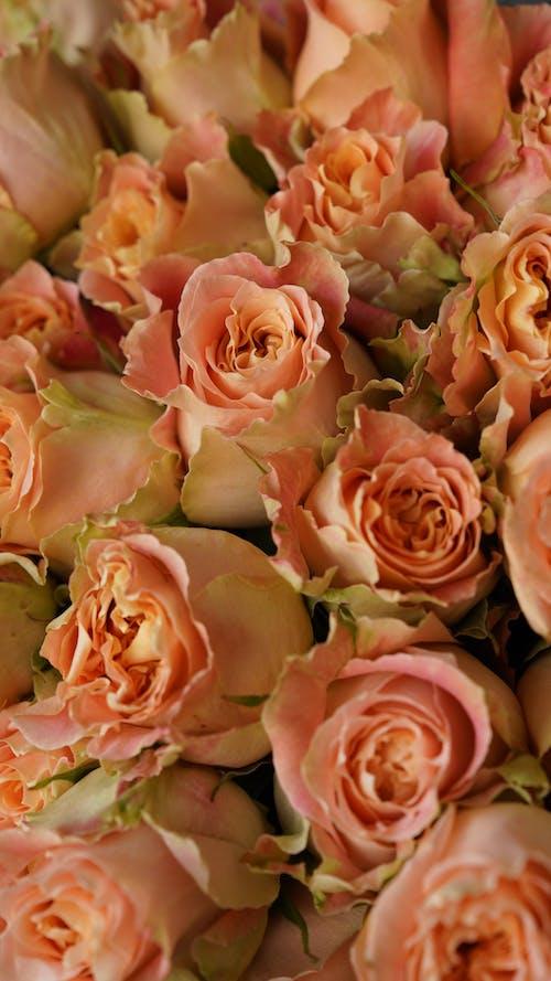 Bouquet of delicate elegant pastel roses
