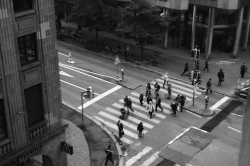 城市, 黑白攝影, 黑色 & 白色 的 免费素材照片