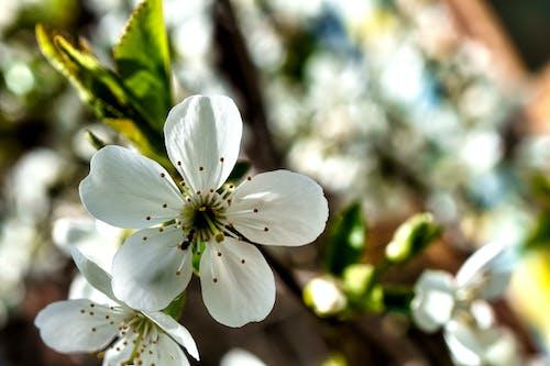 Kostenloses Stock Foto zu ameise, blüte, blütenblätter