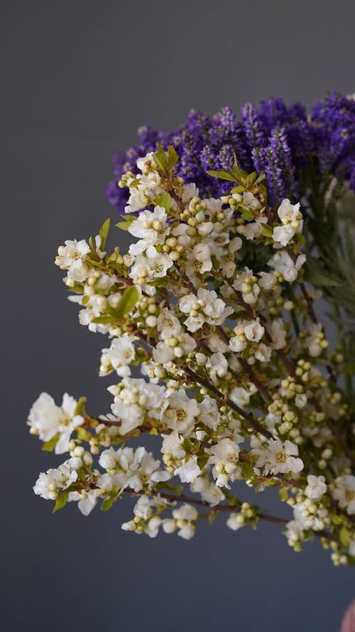 Thin branches of blooming sakura with small white petals and purple lavender flowers placed on gray background in light room