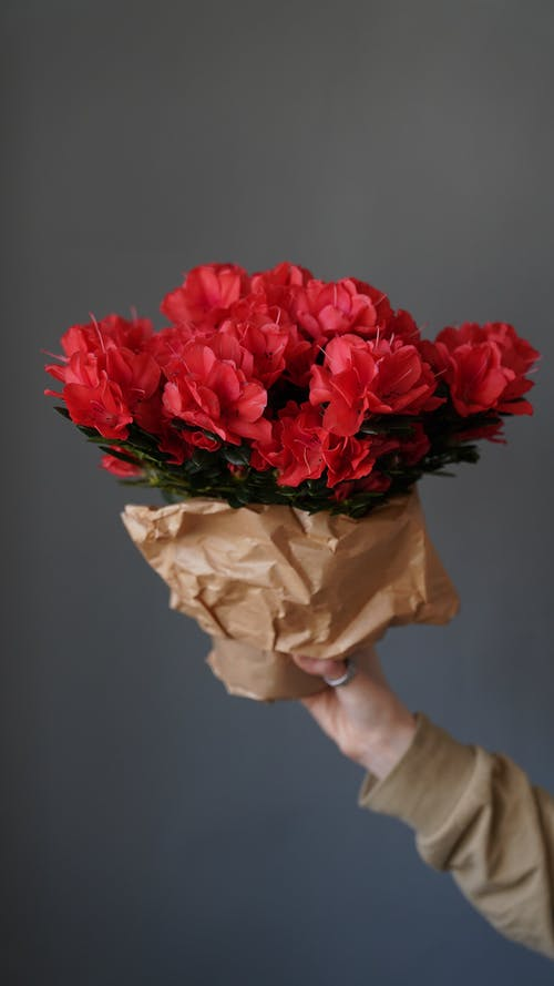 Crop unrecognizable person demonstrating bouquet of red flowers wrapped in craft paper in hand on gray background in light room