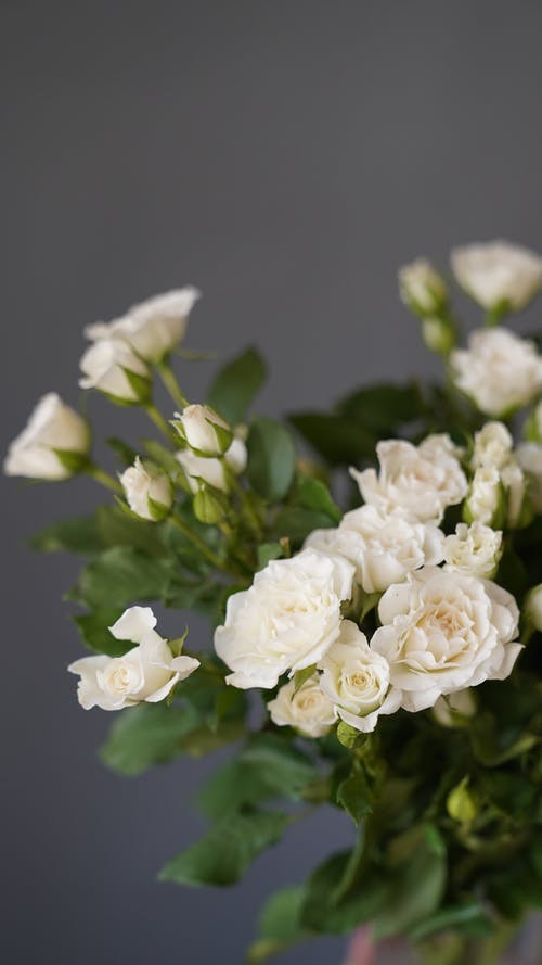 Bunch of white roses in room