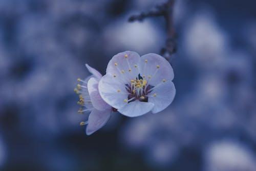 Foto d'estoc gratuïta de a l'aire lliure, albercoc, arbre