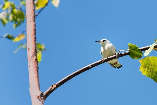 Free stock photo of birds, massachusetts, mohan