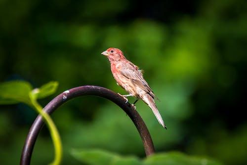 Free stock photo of birds, mohan, nannapaneni