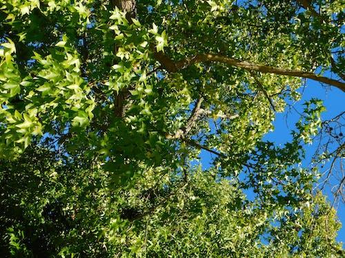 Free stock photo of árbol, naturaleza