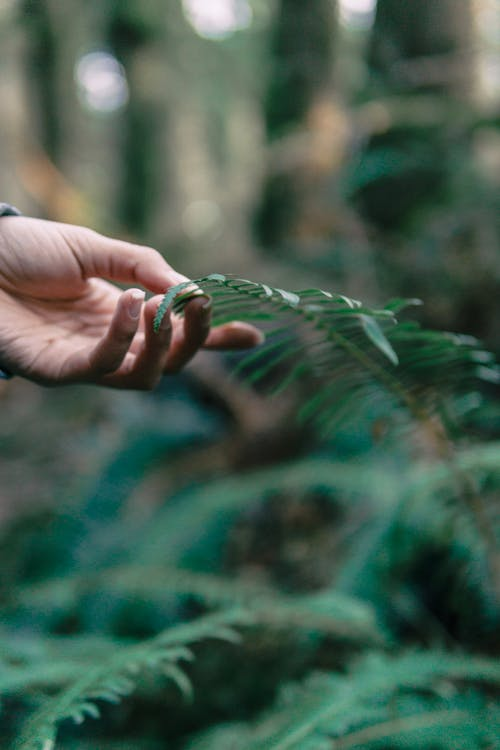 Selective Focus Photo of a Person Touching a Green Leaves
